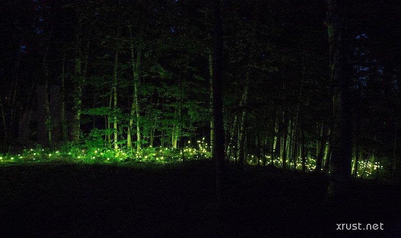 Уникальные места планеты, которые светятся и переливаются по ночам